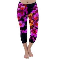 Lantanas Capri Winter Leggings
