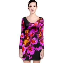 Lantanas Long Sleeve Velvet Bodycon Dress