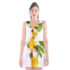 Margaritas Bighop Design Scoop Neck Skater Dress