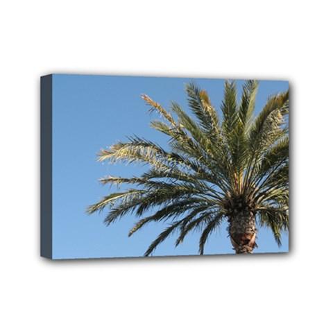 Tropical Palm Tree  Mini Canvas 7  X 5