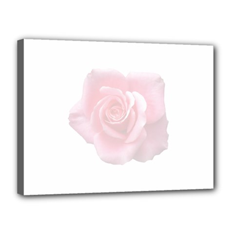 Pink White Love Rose Canvas 16  x 12