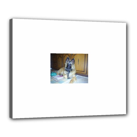 Puppy Belgian Tervueren Canvas 20  x 16