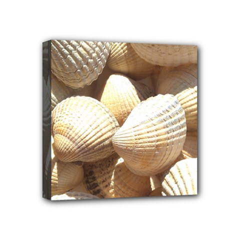 Tropical Exotic Sea Shells Mini Canvas 4  x 4
