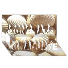 Tropical Exotic Sea Shells Congrats Graduate 3D Greeting Card (8x4)