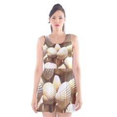 Tropical Exotic Sea Shells Scoop Neck Skater Dress