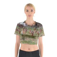 Bloodhounds Working Cotton Crop Top