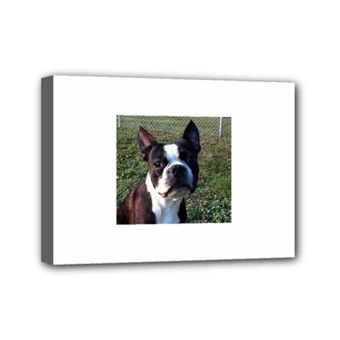 Boston Terrier Mini Canvas 7  x 5