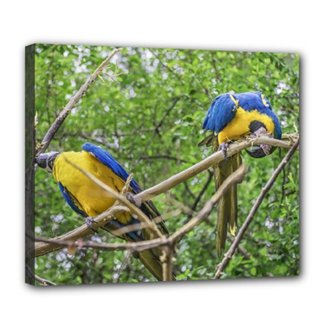 South American Couple Of Parrots Deluxe Canvas 24  x 20