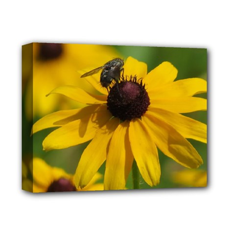 Black eyed Susan Deluxe Canvas 14  x 11