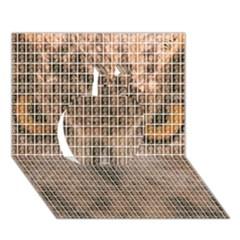 Owl Apple 3d Greeting Card (7x5)