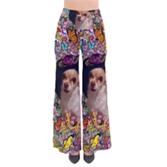 Chi Chi In Butterflies, Chihuahua Dog In Cute Hat Pants