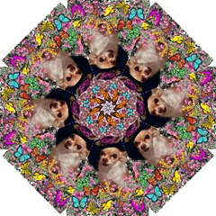 Chi Chi In Butterflies, Chihuahua Dog In Cute Hat Straight Umbrellas