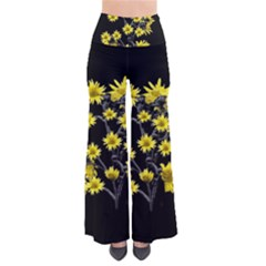 Sunflowers Over Black Pants