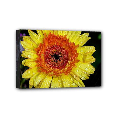 Yellow Flower Close up Mini Canvas 6  x 4