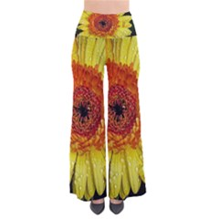 Yellow Flower Close Up Pants