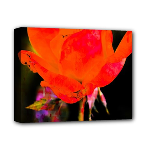 Red Beauty Deluxe Canvas 14  x 11