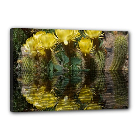 Cactus Flowers with Reflection Pool Canvas 18  x 12