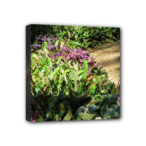 Shadowed ground cover Mini Canvas 4  x 4