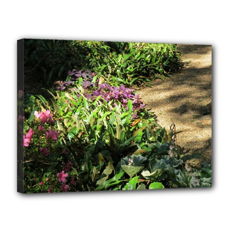Shadowed ground cover Canvas 16  x 12