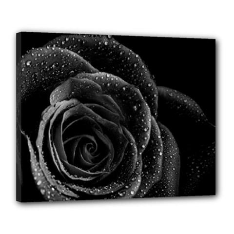 Black Rose Canvas 20  x 16  (Framed)