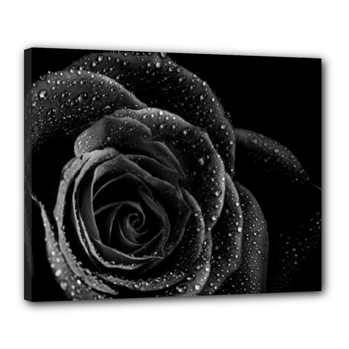 Black Rose Canvas 20  x 16  (Framed)