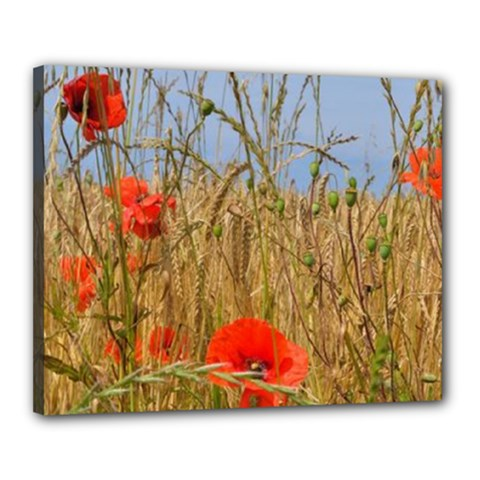 Poppies Flowers Canvas 20  X 16  (framed)