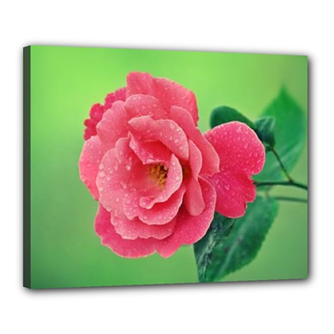 Pink Rose Canvas 20  x 16  (Framed)