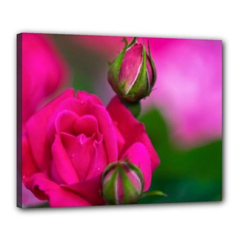 Pink Rose Canvas 20  X 16  (framed)