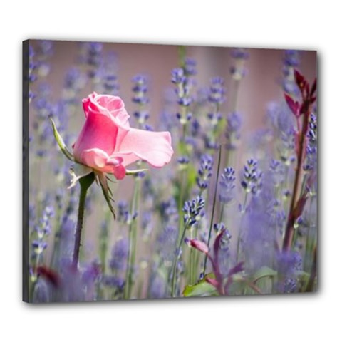 Rose Flower Lavander Canvas 24  X 20  (framed)