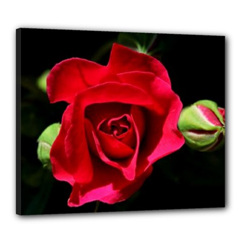 Red Roses Canvas 24  X 20  (framed)