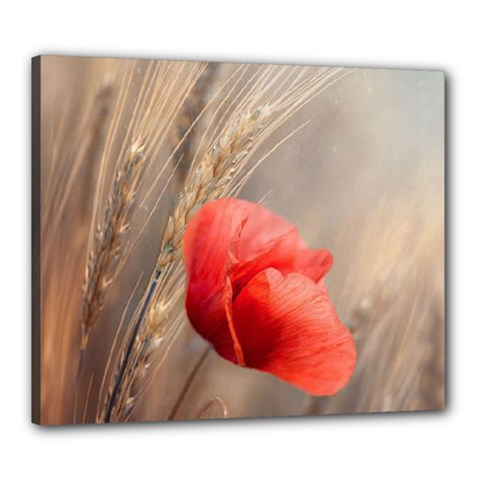 Red Poppy Canvas 24  X 20  (framed)