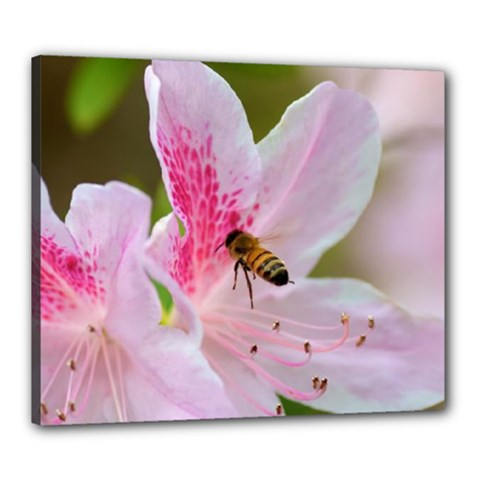 Pink Flowers Canvas 24  X 20  (framed)