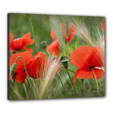 Red Poppy Canvas 24  X 20  (framed)