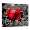 Red Rose Canvas 24  x 20  (Framed) View1