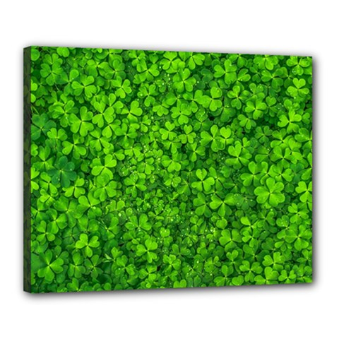 Shamrock Clovers Green Irish St  Patrick Ireland Good Luck Symbol 8000 Sv Canvas 20  x 16