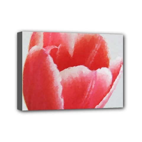 Tulip red watercolor painting Mini Canvas 7  x 5