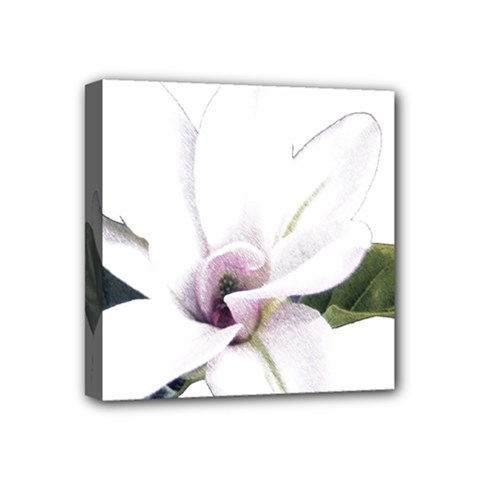 White Magnolia pencil drawing art Mini Canvas 4  x 4