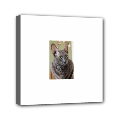 Cornish Rex, Blue Mini Canvas 6  x 6