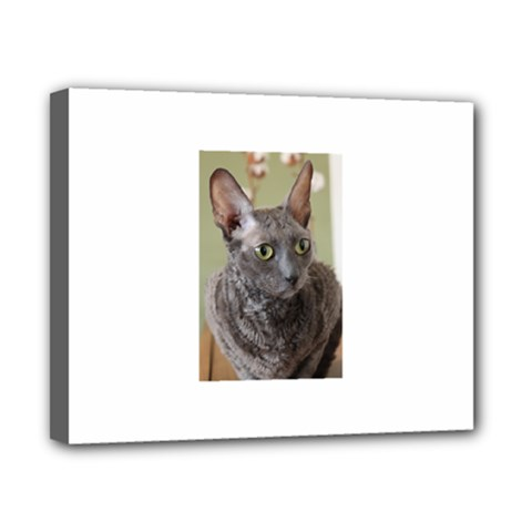 Cornish Rex, Blue Canvas 10  x 8