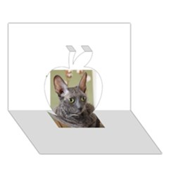 Cornish Rex, Blue Apple 3D Greeting Card (7x5)