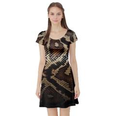Snake Skin Olay Short Sleeve Skater Dress