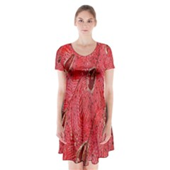 Red Peacock Floral Embroidered Long Qipao Traditional Chinese Cheongsam Mandarin Short Sleeve V-neck Flare Dress