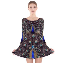 Peacock Long Sleeve Velvet Skater Dress