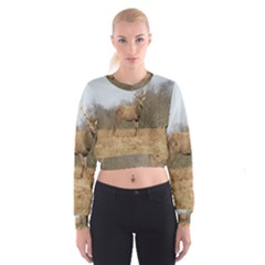 Red Deer Stag on a Hill Women s Cropped Sweatshirt
