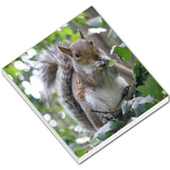 Gray Squirrel Eating Sycamore Seed Small Memo Pads
