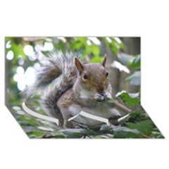Gray Squirrel Eating Sycamore Seed Twin Heart Bottom 3d Greeting Card (8x4)