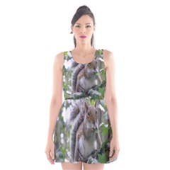 Gray Squirrel Eating Sycamore Seed Scoop Neck Skater Dress