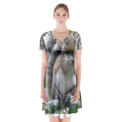 Gray Squirrel Eating Sycamore Seed Short Sleeve V-neck Flare Dress