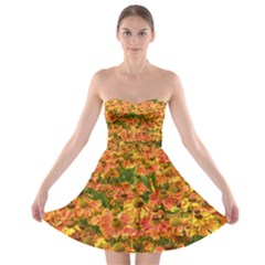 Helenium Flowers and Bees Strapless Bra Top Dress