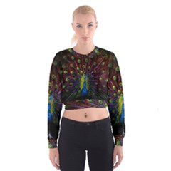 Beautiful Peacock Feather Women s Cropped Sweatshirt